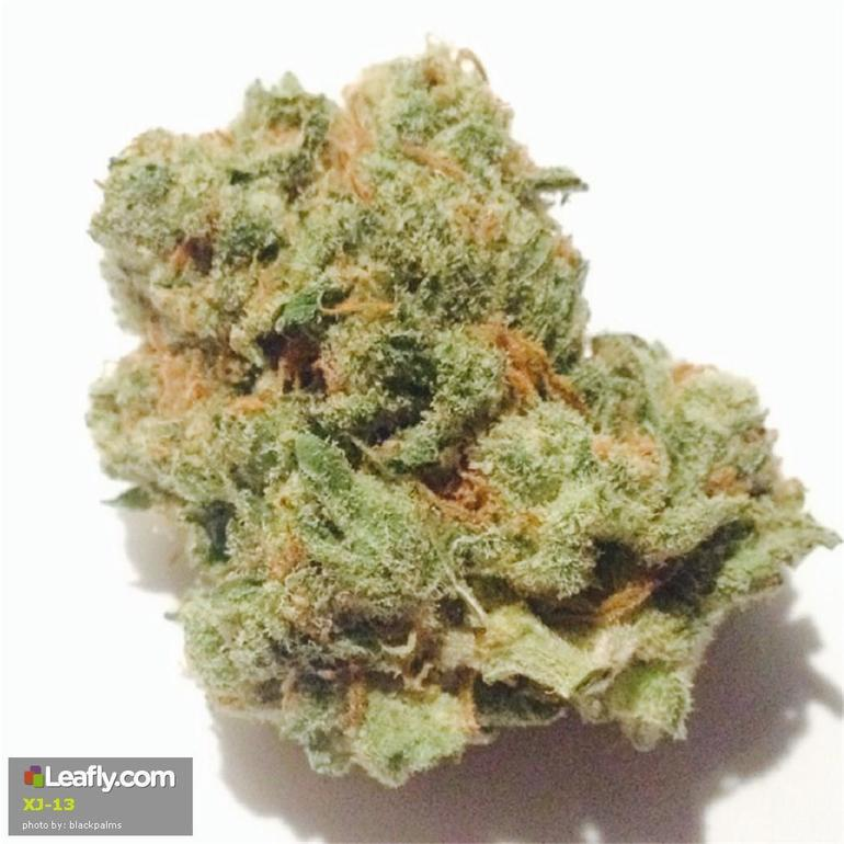 XJ-13 | cannabisstores