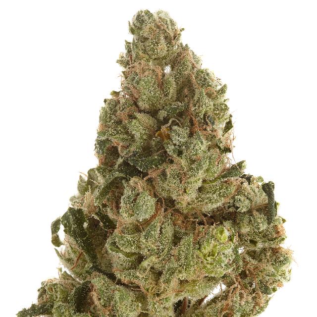 HARBORSIDE BIODIESEL (H) CG 3.5G| cannabisstores