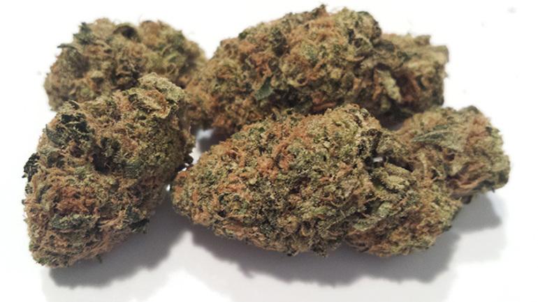 Gorilla Scout   cannabisstores