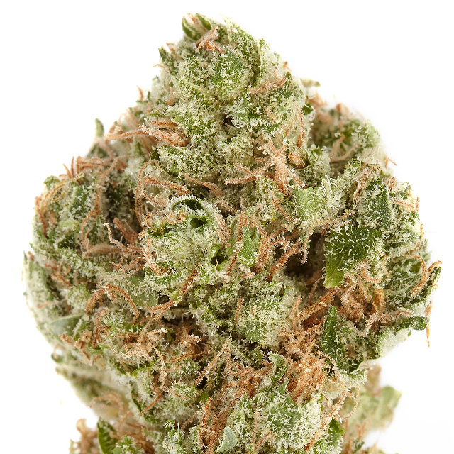 HARBORSIDE ARC (H) CG 3.5G| cannabisstores