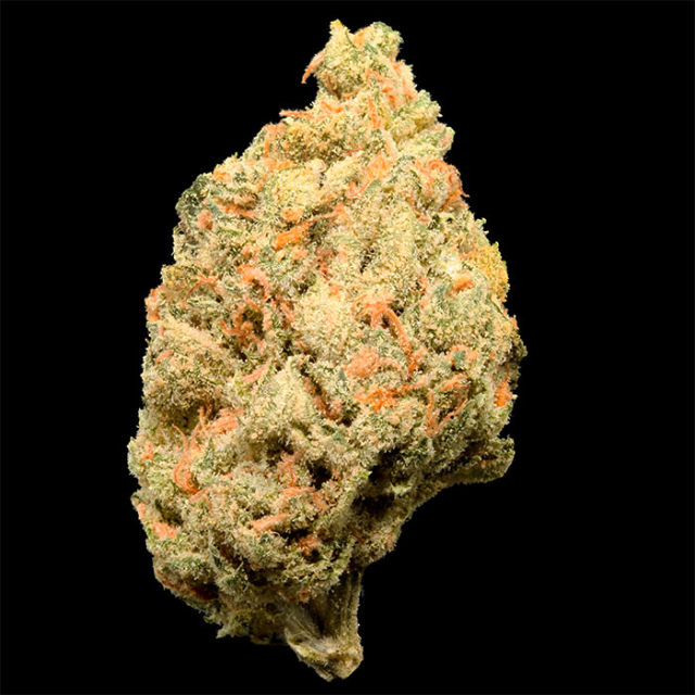 INGRID EIGHTH| cannabisstores