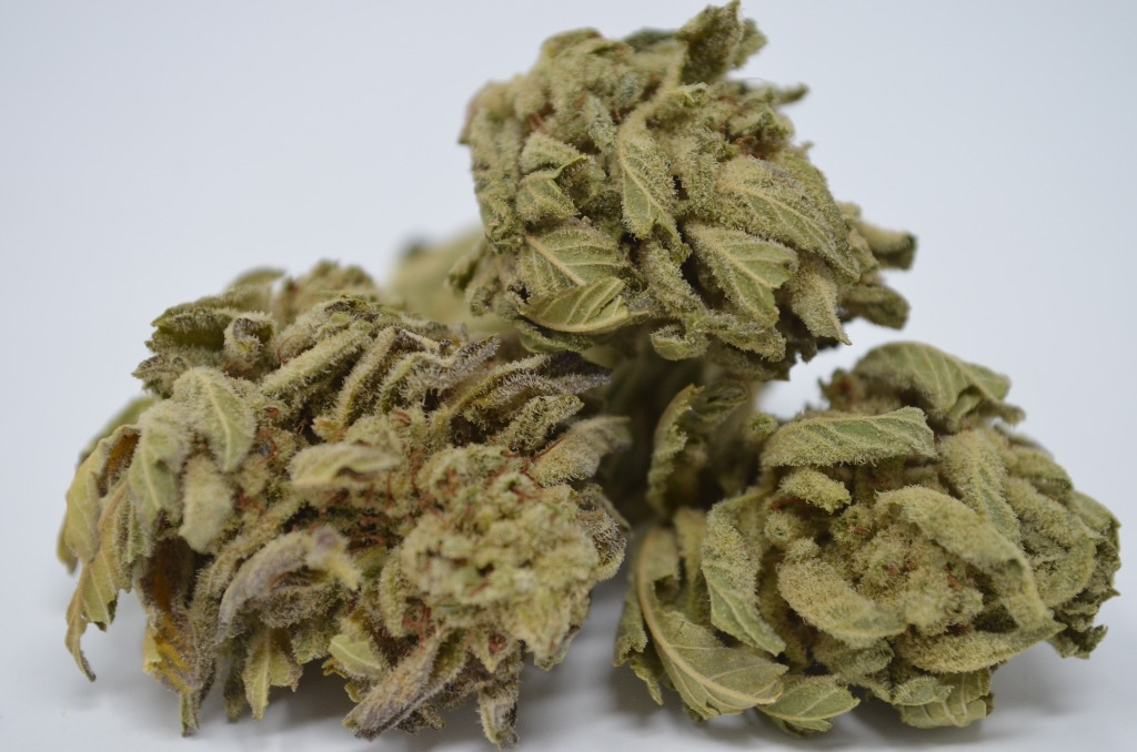 OG Kush 16.47% // SPECIAL| cannabisstores