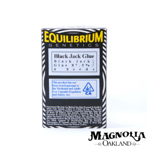 BLACK JACK GLUE SEEDS 6PK